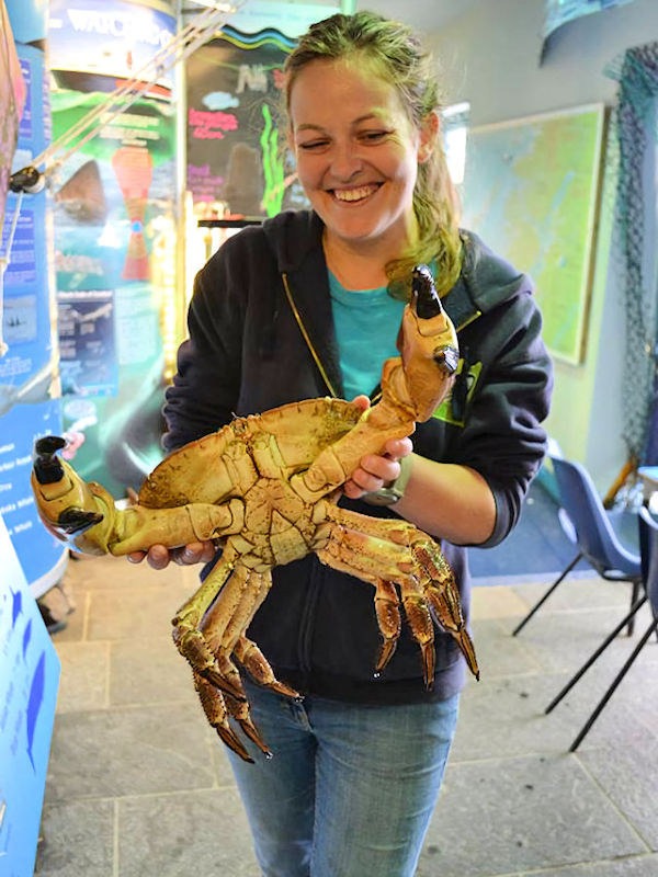 Staff with Edible Crab